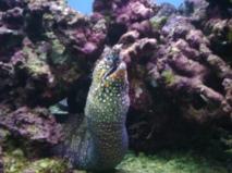 Oahu June 25 2012 043