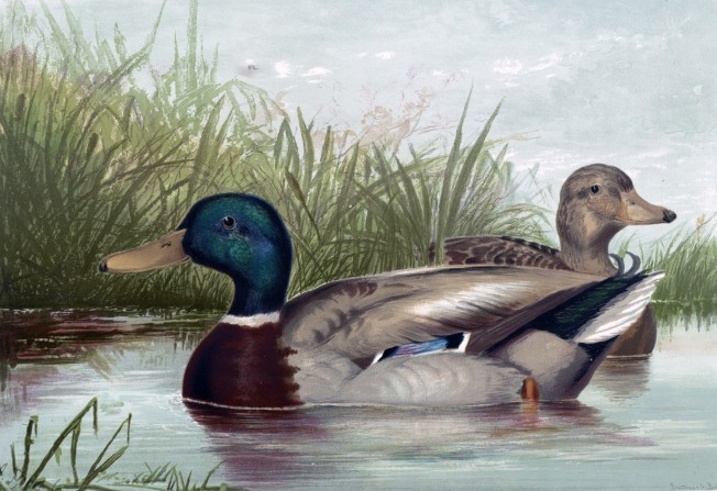 ducks-on-pond-painting