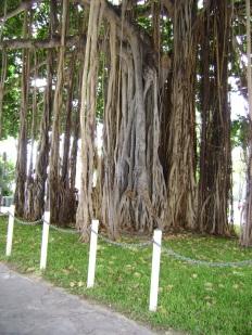 Oahu June 20 2012 016