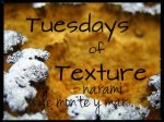 TUESDAYS OF TEXTURE | WEEK 40 OF 2016