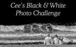 Cee's Black & White Photo Challenge: Motto