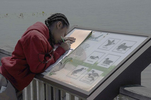 child_is_seen_trying_her_hand_at_drawing_birds
