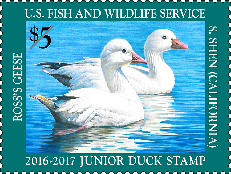 jr-duck-stamp-2016-2017
