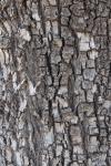 Tuesdays of Texture:Ruff!
