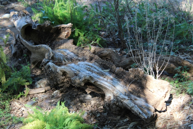 Fallen tree; Rotted tree trunk