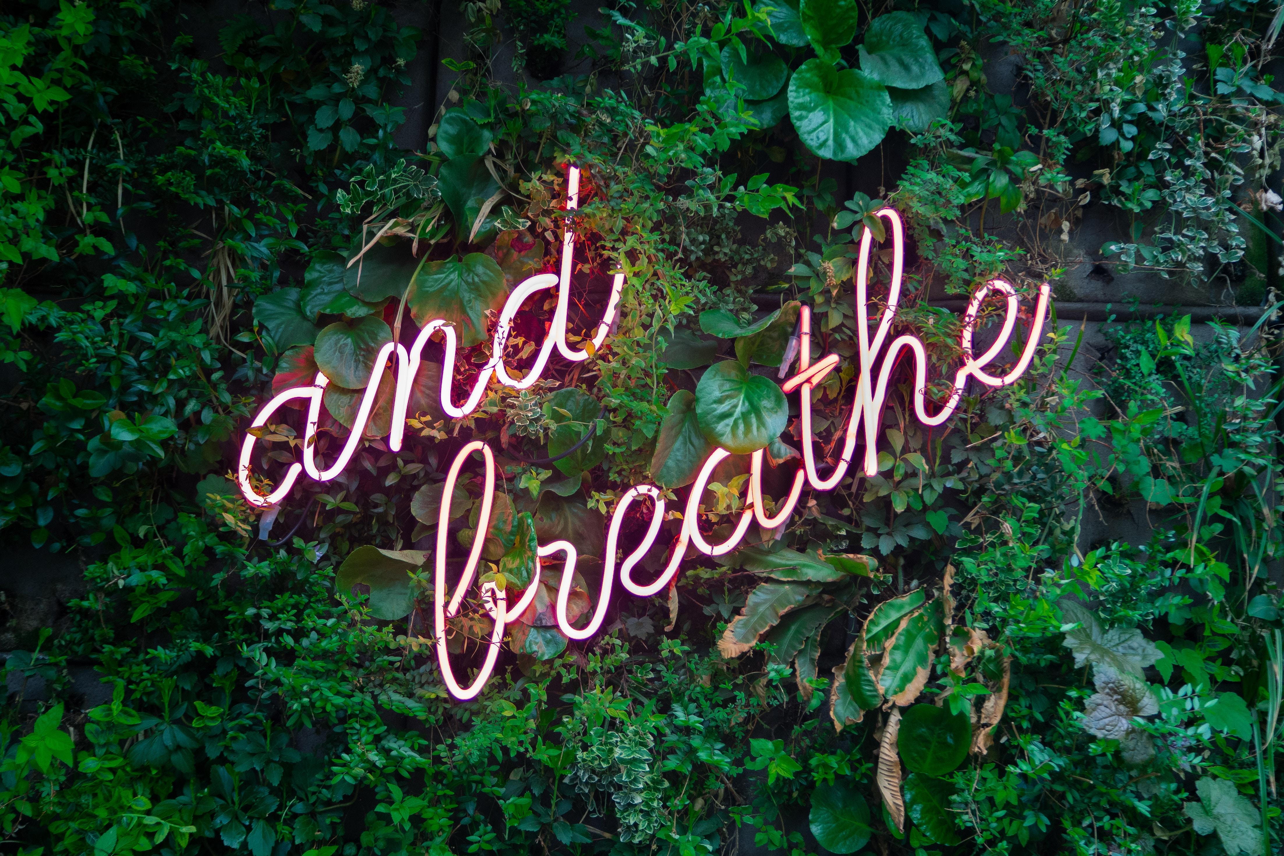 Breathe max-van-den-oetelaar-646474-unsplash